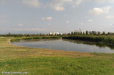 Vista d'un dels estanys de la Torre d'en Dolça