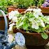 Καταπληκτικό κόλπο! Δοκιμάστε το και δείτε τα φυτά σας να μεγαλώνουν στο άψε-σβήσε!