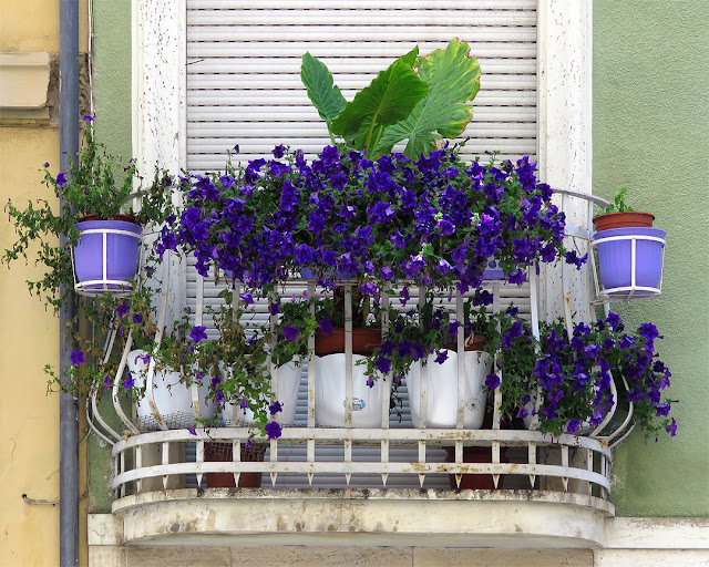 Flowered balcony, via dei Cavalieri, Livorno
