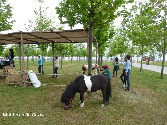 pony horse