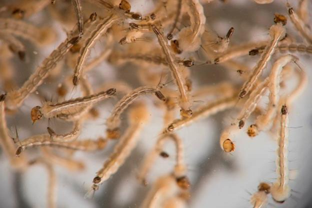 DOH on high alert re: Zika virus