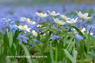 blaue und weiße frühlingblumen foto von stampin up demonstratorin susis basteltipps