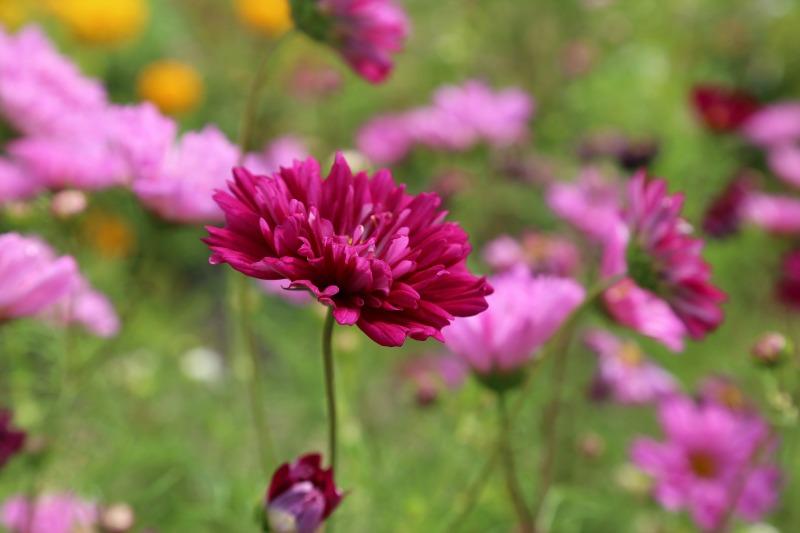 Flores en una pradera de silvestres