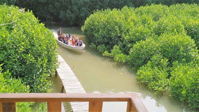 Hutan Mangrove Kebumen