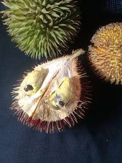 papakin, lahung, marawin, durian dari kalimantan