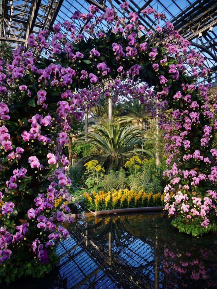 Arco de Phalaenopsis Longwood Gardens 2017 Orchid Extravaganza
