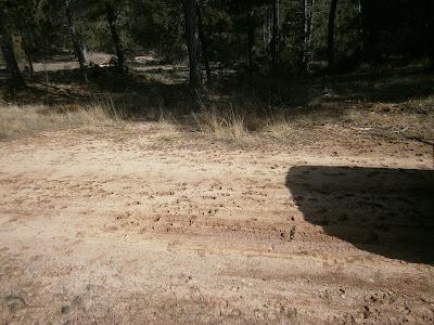 Huellas de ciervos en la Serranía de Cuenca (españa)