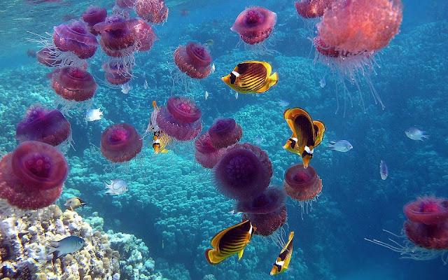 Roze kwallen en gele vissen in helderblauw water
