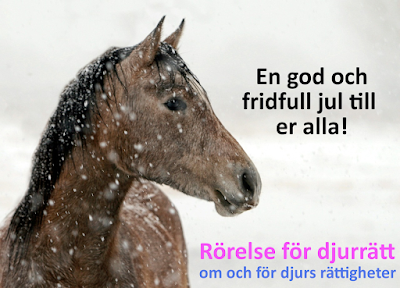 God och fridfull jul med häst - Rörelse för djurrätt
