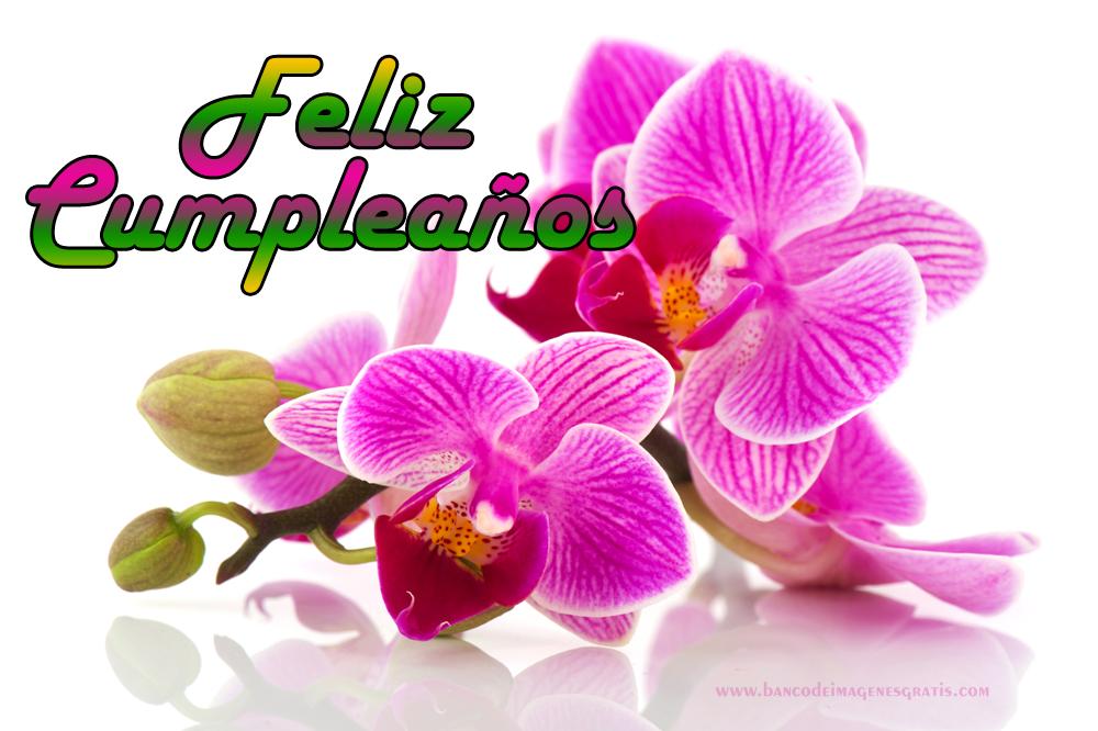 BANCO DE IMÁGENES: Feliz Cumpleaños Con Rosas Y