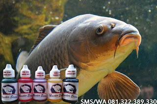 Essen Untuk Umpan Ikan Mas Galatama
