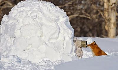 Fotógrafo camuflajeado en la nieve
