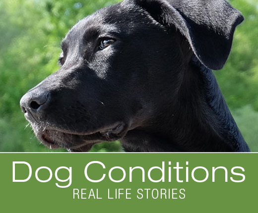 Dog Conditions - Real Life Stories: Sago Palm Poisoning: Piper's Brush with Death