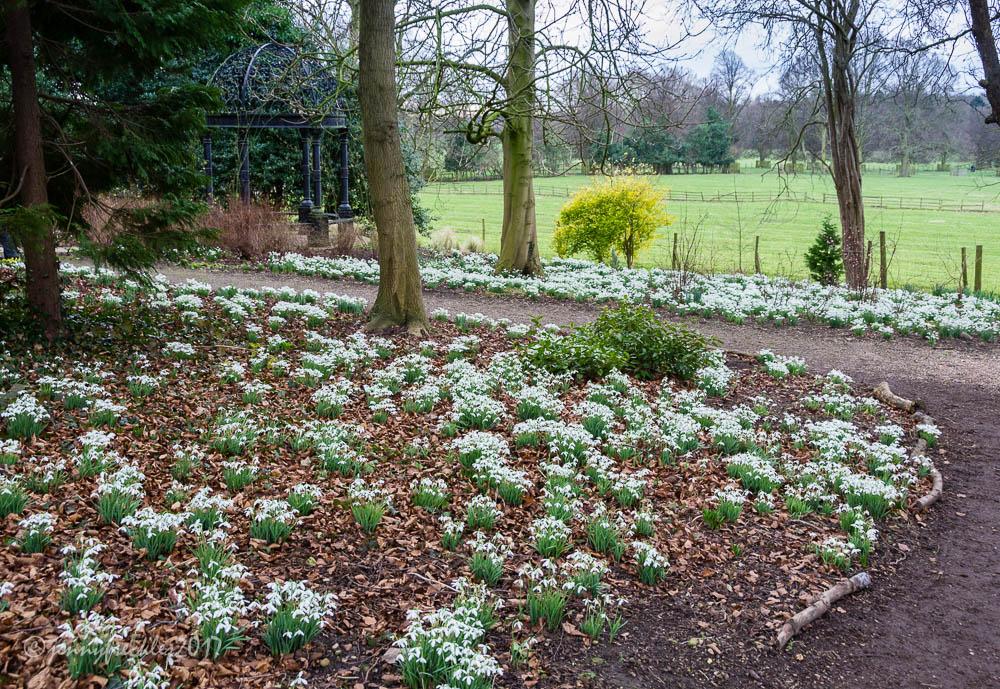Saltaire Daily Photo Snowdrop Gardens