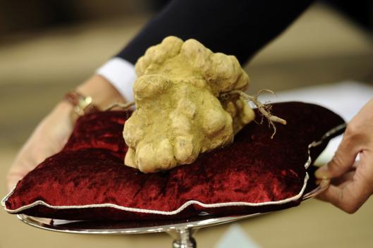 Italian White Alba Truffle adalah Truffle makanan paling mahal di seluruh dunia