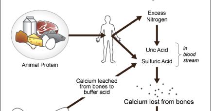 Kidney Disease: Chronic Kidney Disease and Osteoporosis