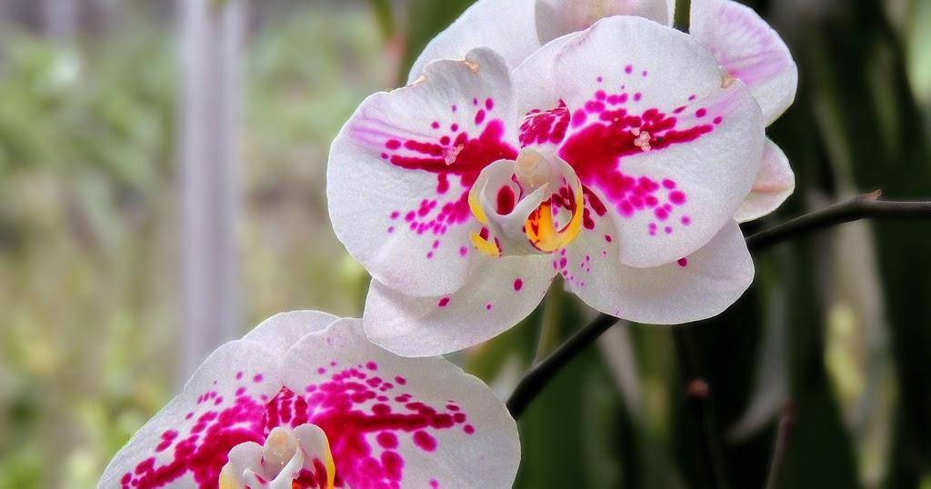 Contoh Teks Laporan Hasil Observasi Tentang Bunga Melati Berbagai Teks Penting
