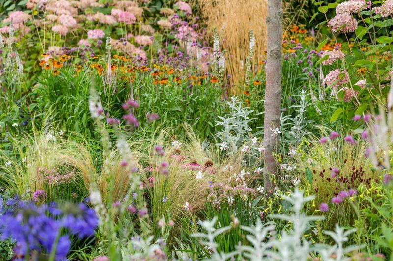 plantación con flores que atraen insectos polinizadores al jardín