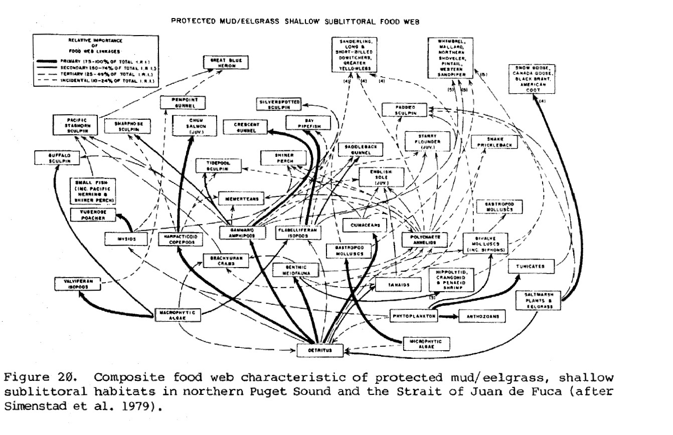 pacific ocean food web diagram 1955 chevrolet truck wiring ecosystem plant