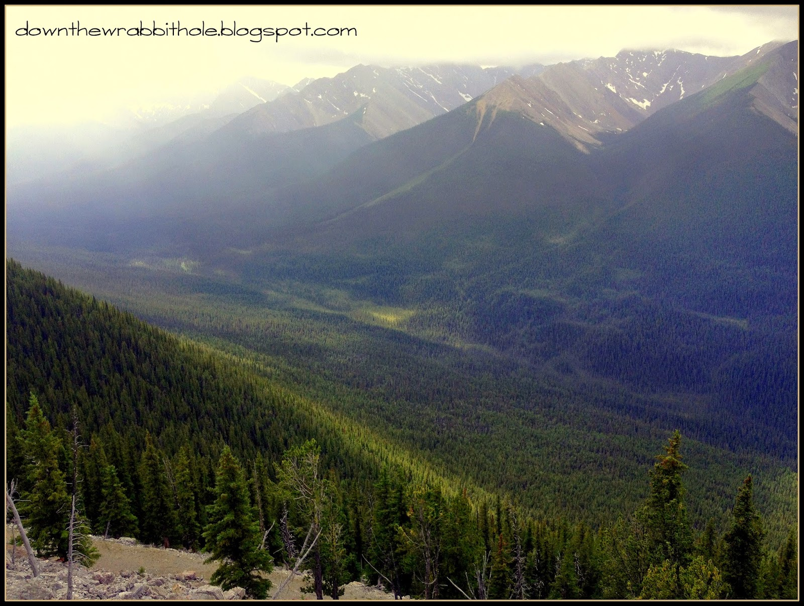Rocky Mountain trees, Rocky Mountain valley, Banff Gondola, Sulphur Mountain