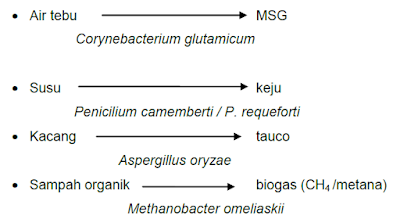 Contoh fermentasi