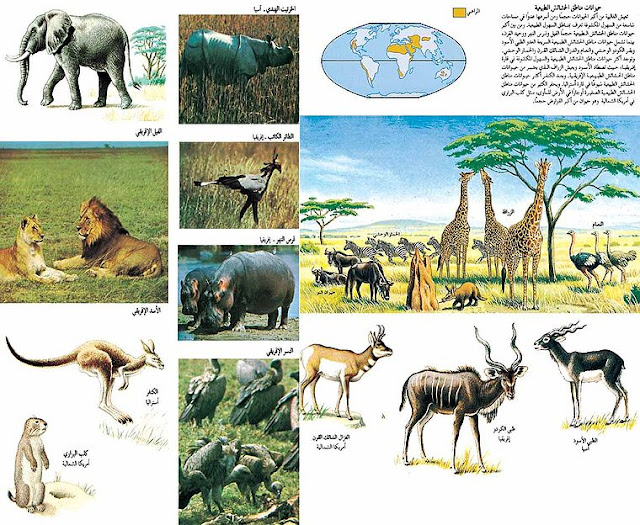 بحث حول التنقل عند الحيوان