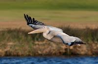 Birds In Flight Photography Cape Town: Canon EOS 7D Mark II Gallery