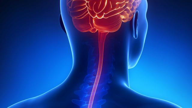 Saúde é Vida: O que é meningite e como prevení-la