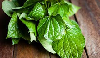 manfaat daun sirih untuk keputihan, cara menggunakan daun sirih untuk miss v, cara mengobati keputihan dengan daun sirih hijau, minum rebusan daun sirih, daun sirih untuk keputihan gatal, daun sirih untuk keputihan diminum, khasiat daun sirih untuk keputihan berlendir, daun sirih untuk keputihan dan kental, cara merebus daun sirih untuk cebok