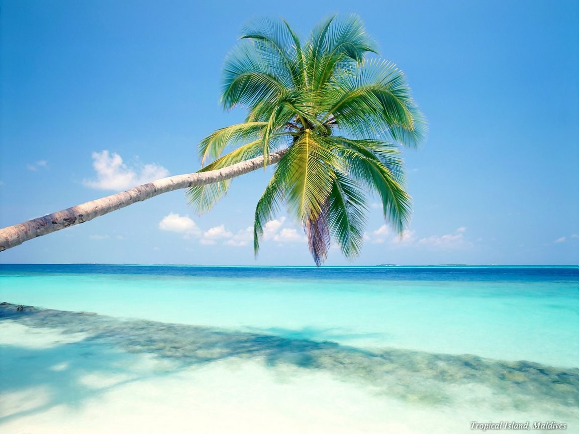 Sam S Club Caribbean Travel Packages
