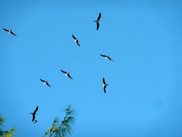 https://voyagestousrisques.blogspot.com/2018/06/les-seychelles-le-paradis-des-oiseaux.html