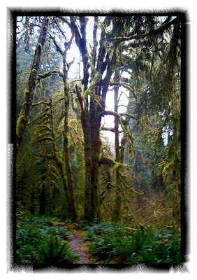 hoh rain forest trail