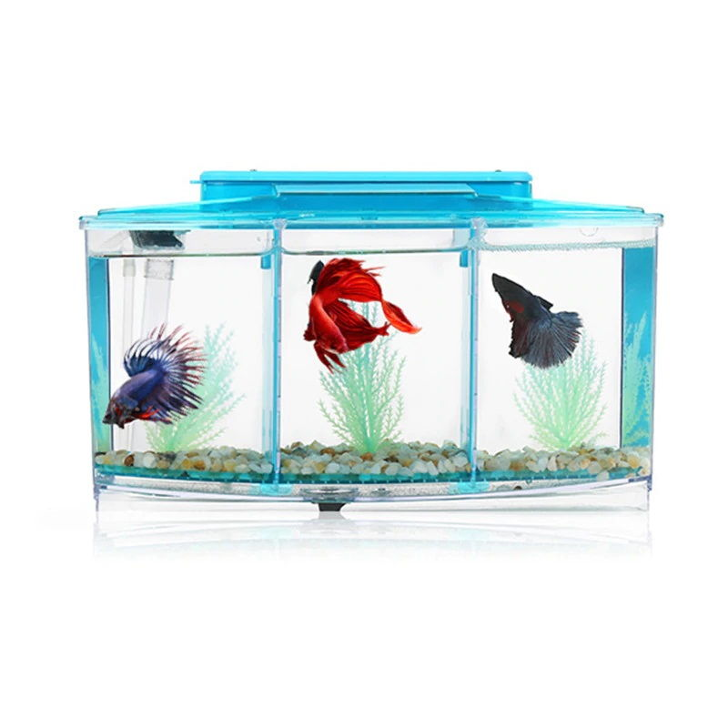 Image The One Thing to Do for How Long Can a Betta Fish Live in a Fishbowl