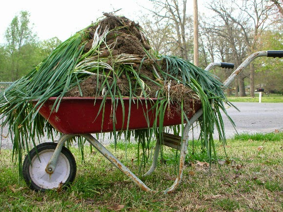 Fall Vegetable Garden Cleanup By Audrey Stokes