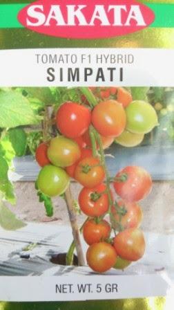 Benih, simpati,tomat, tahan virus,kuning, keriting, unggul, dataran rendah, tinggi, petani, Sakata Seed, Harga Murah, Tomat Simpati