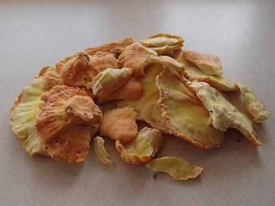 Żółciak siarkowy Laetiporus sulphureus