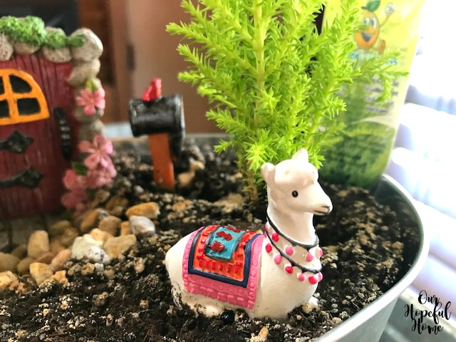 sitting llama fairy garden dirt container mini lemon cypress