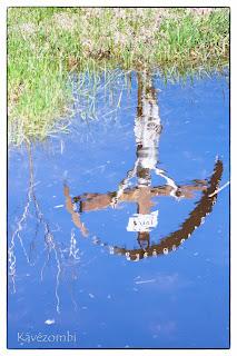 Kereszt tükörképe egy tócsában