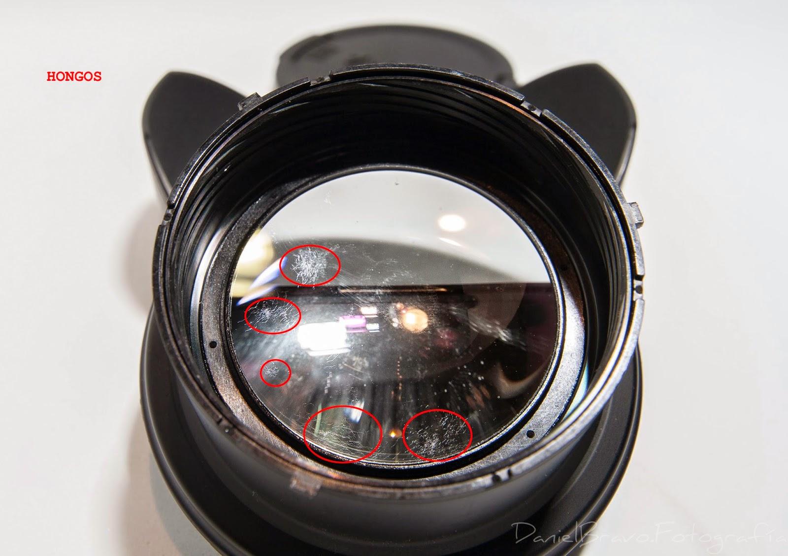 Objetivo, fotografía, Sigma, hongos