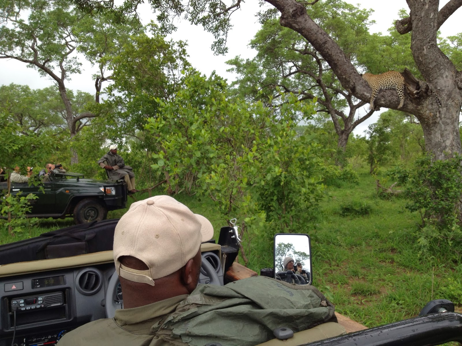 Sabi Sands - The leopard is busy snoozing