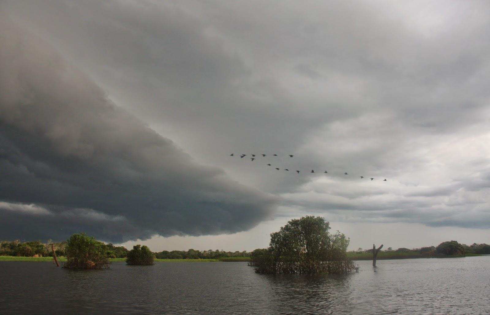 A chuva amazônica