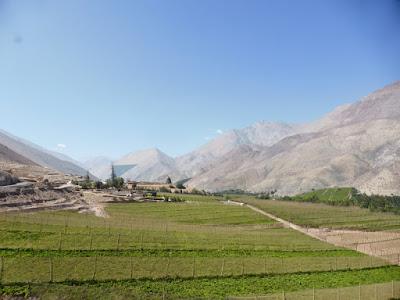El valle del Elqui está repleto de viñedos