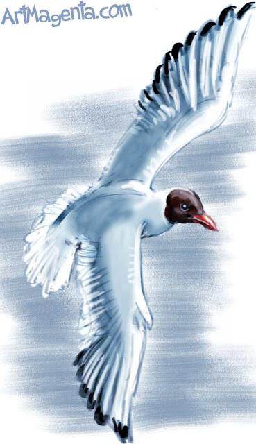 Black-headed Gull sketch painting. Bird art drawing by illustrator Artmagenta