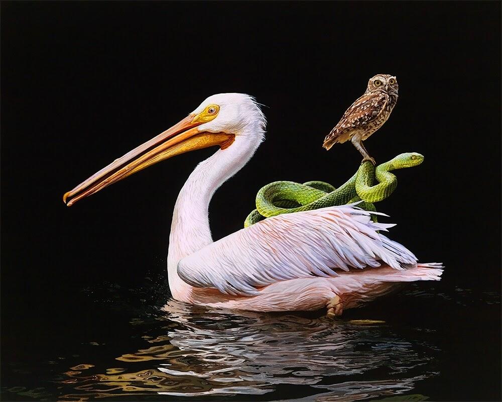 04-Distant-Shore-Lisa-Ericson-Animals-Interspecies-Friendships-Paintings-www-designstack-co