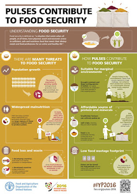 FAO - Pulses contribute to Food Security