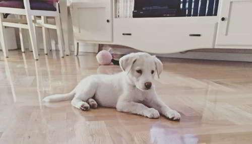 cachorra talla mediana