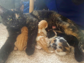Dotty and her Kittens
