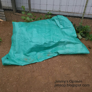 Green tarp covering live animal trap containing trapped skunk sitting next to a fence