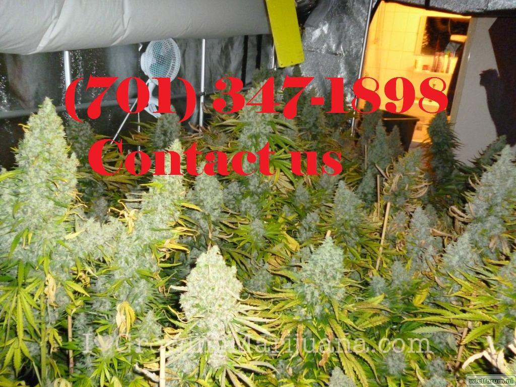 Nembutal, mephedrone, MDPV, heroin, ketamine, GHB, ephedrine