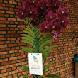 Orchids de Dangau: Penang Bi-Monthly Orchid Show - August 2015 Updates